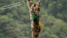 Birds-of-Manu-Road