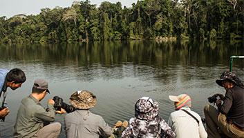 River Otters at Salvador Lake in Manu
