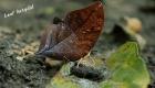 amazon-insects-peru