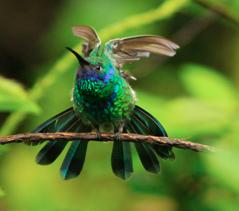 birding tours