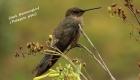 birds-of-cusco