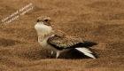 birds-of-manu-river