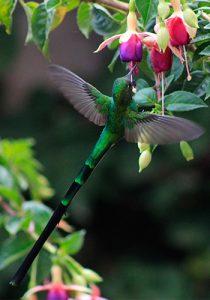 Aves de Peru - Birds of Peru