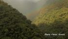 cloud-forest-manu