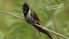 endemic-birds-of-peru