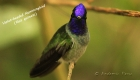 hummingbirds-of-peru