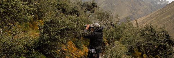 Birding at Abra Malaga - Cusco